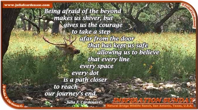 Poem-In-A-Photo. Poem about empowerment and courage. Photo at the Life Natural Bridge Wildfire Ranch in San Antonio, Texas, USA. Captures a deer sitting on the tall green grass, with tree branches in the far and the sun shining in between. @JuliaFCardenasC