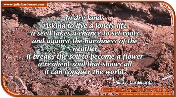 Poem-In-A-Photo. Poem about resilience and empowerment. Photo of a red arid sand with a green plant growing against the harshness of the land, taken at Rainbow Town in San Diego, California, USA. @JuliaFCardenasC