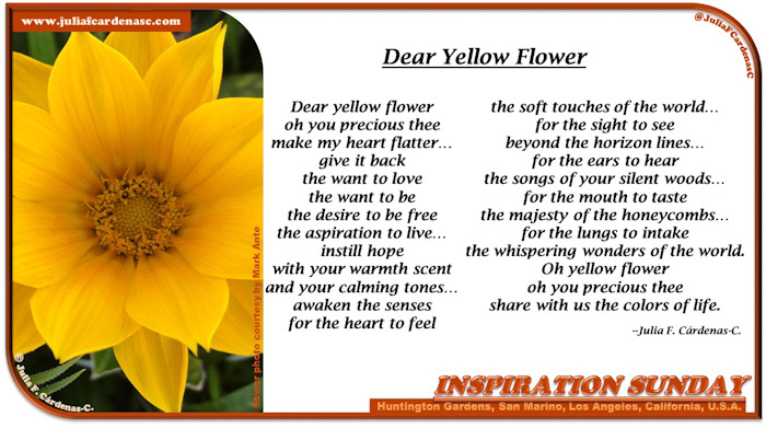 Inspiration Sunday Poem-In-A-Photo. Bright yellow flower photo that inspired the poem written by its side. Tag: @JuliaFCardenasC