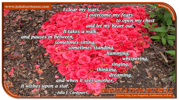 Poem-In-A-Photo. Poem about second chances in love. Inspirational photo of a heart made with natural flowers. Its bright colors contrast with the brown of the grounds. Perfect image on this Love Day. @JuliaFCardenasC